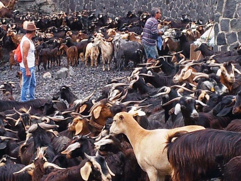 San Juan de las cabras