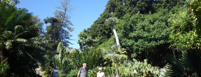 Un paseo  por el Jardín Botánico