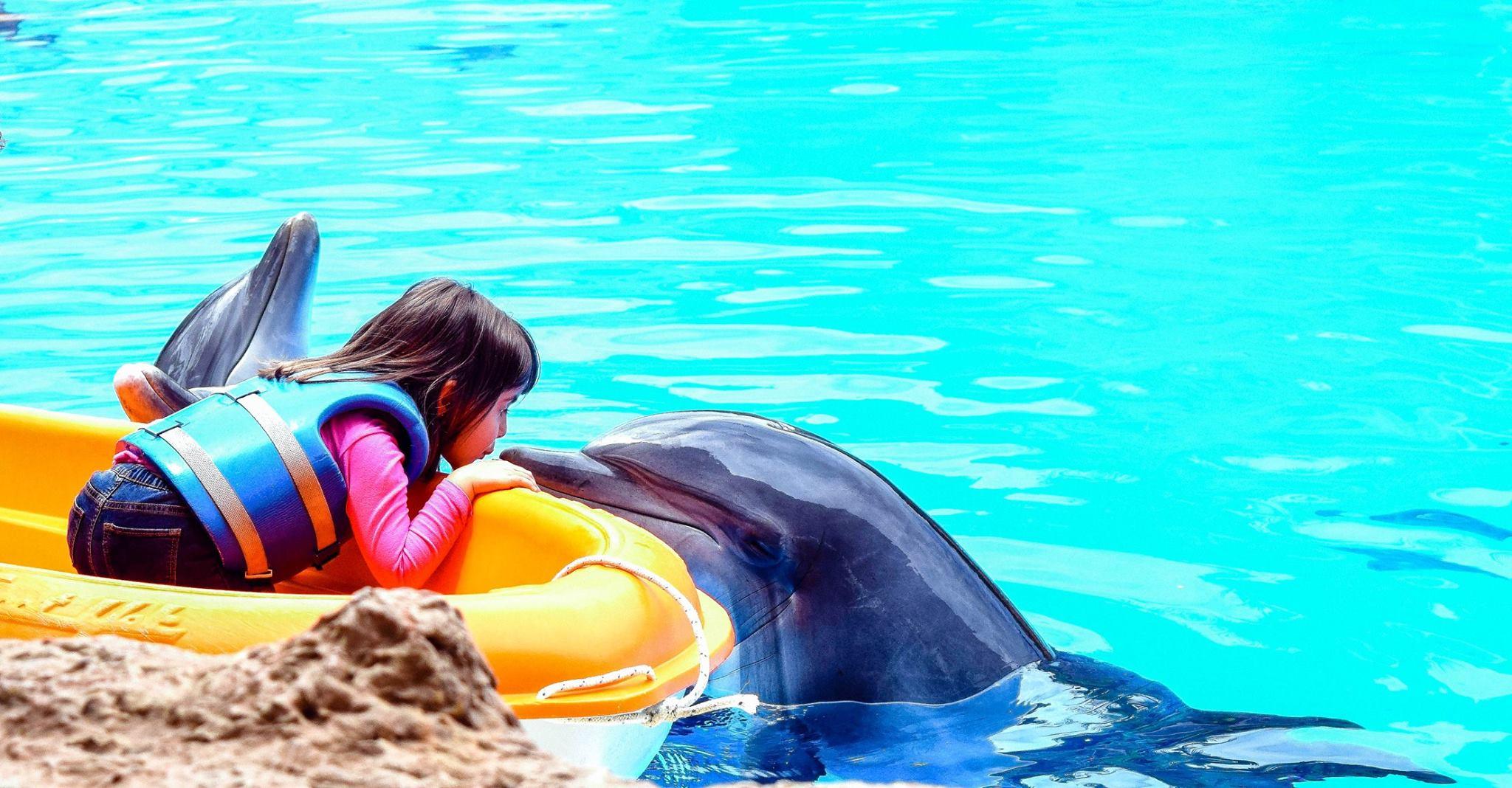 Loro Porque.Delfines