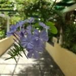 Paseo de colores: Jardín de Orquídeas Sitio Litre